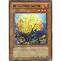 Brennende Algen