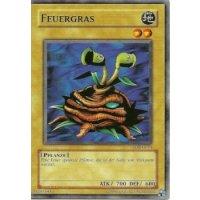 Feuergras