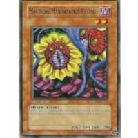 Magische Mandragola-Pflanze