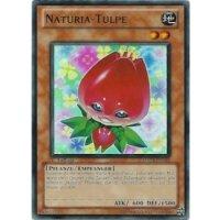 Naturia-Tulpe