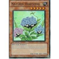 Naturia-Hortensie