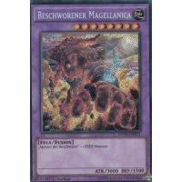 Beschworener Magellanica
