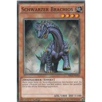 Schwarzer Brachios